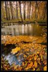 """L_S """"Jesienny zawrót głowy"""" (2009-11-02 11:45:23) komentarzy: 22, ostatni: super"""