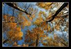 """popo007 """"jesienny zawrót głowy..."""" (2009-11-02 20:34:43) komentarzy: 10, ostatni: tu tez fajne swiatło i od razu ciekawiej wyglada"""