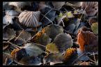 """L_S """"Teoria chaosu"""" (2009-11-03 10:43:49) komentarzy: 15, ostatni: ładne"""