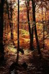 """Tadek Piotrowski """"Zagubiony w lesie"""" (2009-11-04 20:40:52) komentarzy: 7, ostatni: ++++"""