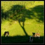 """agatitota """""""" (2009-11-04 21:59:18) komentarzy: 1, ostatni: ..dobrze, że cień znalazły"""