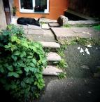 """drax """"wileński pies podwórzowy"""" (2009-11-05 13:07:25) komentarzy: 15, ostatni: jak na holge to ostra :D"""