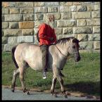 """kazan48 """"Wspólczesny krakowski lajkonik."""" (2009-11-06 12:31:19) komentarzy: 16, ostatni: Hermes, ostatni hipis w Krakowie, zazwyczaj boso. tu jeszcze tylko klacz a potem był i źrebak - pasły sie dwa w różnych miejscach. podobno aktualnie jest w Hiszpanii a konie trafiły do jakiegoś schroniska."""