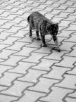 """detective """"""""Na liniach..."""""""" (2009-11-07 16:00:39) komentarzy: 5, ostatni: No dokładnie. Jakaś taka zmartwiona i nie pewna jutra, ta kocia mordka a do tego skacze pomiędzy liniami jak kot po .. no, tak właśnie wygląda ;) zabobonny kot musi być :)"""