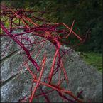 """MartaW """"(prowokacyjne zdjęcie)"""" (2009-11-10 15:00:39) komentarzy: 22, ostatni: a ja może mam coś nie tak z głową, ale mnie się ta kompozycja podoba, świetne kontrastowe zestawienie kolorów oraz interesująca dynamiczna, pozornie bałaganiarska kompozycja"""