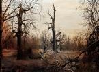 """Żaba-Ewa """"Świat Entów"""" (2009-11-12 12:53:23) komentarzy: 19, ostatni: caspar david friedrich.......... podobne miałam skojarzenie :)"""