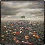 """klimat """""""" (2009-11-12 13:10:02) komentarzy: 51, ostatni: Pory roku...każda ma swoj sens."""