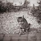 """MonikaMM """"kot"""" (2009-11-15 21:02:52) komentarzy: 18, ostatni: :D"""