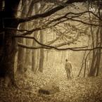 """AlinaJJJ """"***"""" (2009-11-16 13:39:52) komentarzy: 43, ostatni: zamyślone i prawdziwe, oddech jesieni, może być piękna :)"""