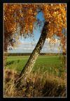"""popo007 """"cd..."""" (2009-11-17 20:39:07) komentarzy: 7, ostatni: przyjemne kolorki"""