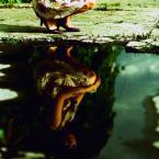 """Zakamarek01 """"Magda..."""" (2009-11-20 13:35:54) komentarzy: 4, ostatni: Odwróć, odwróć... koniecznie :) na pewno będzie lepiej w odbiorze... a co do zakamarków, to się okaże :)"""