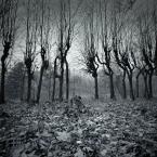 """AlinaJJJ """"***"""" (2009-11-20 21:33:26) komentarzy: 37, ostatni: Duszek leśny się odkrywa."""