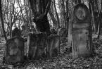 """Finiu """""""" (2009-11-24 22:54:07) komentarzy: 14, ostatni: Trochę. Ale tylko trochę. Mennonici na przykład, po wielu latach nieobecności na Żuławach, zaczęli dbać o własne - nazwijmy to - pozostałości po ich istnieniu. Mam sporo zdjęć z cmentarzy mennonickich (również i tu, w folio na plfoto), i..."""