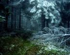 """weisfeldt """"przejście."""" (2009-11-27 23:35:49) komentarzy: 13, ostatni: Dobra fota zimno!!!"""