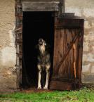 """asiasido """"psie skargi"""" (2009-11-30 14:52:43) komentarzy: 12, ostatni: skojarzenie błyskawica- ferdydurke"""