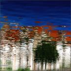 """Anavera """"impresja z drzewem"""" (2009-12-03 21:28:01) komentarzy: 9, ostatni: +"""
