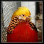 """popo007 """"mam na ciebie oko..."""" (2009-12-07 19:18:28) komentarzy: 3, ostatni: ptasia piękność :-}}"""