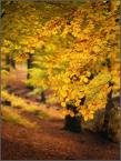 """kariola """"pędzlem jesieni .."""" (2009-12-16 20:34:57) komentarzy: 28, ostatni: Jesień jest piękna"""