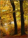 "kariola ""Filary jesieni:)"" (2009-12-20 17:15:09) komentarzy: 13, ostatni: podpory-kolory"