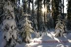 """prezes81 """"Najlepsze życzenia!"""" (2009-12-24 12:21:52) komentarzy: 5, ostatni: wzajemnie, życzenia świetnych kadrów w nadchodzącym roku.."""