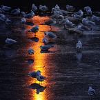 """sandiego """"w świetle latarni"""" (2009-12-28 13:26:38) komentarzy: 23, ostatni: ZŁOTA DROGA"""