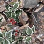 """zippuro """"memento..."""" (2010-01-01 12:06:27) komentarzy: 5, ostatni: fajnie oszronione liście,wszystkiego dobrego w Nowym Roku"""