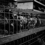 """marcin wuu """"Wolnym być niczym ptak..."""" (2010-01-04 22:28:26) komentarzy: 3, ostatni: cała prawda o wolności"""