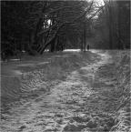 "kops ""zima w parku? v2"" (2010-01-15 14:30:14) komentarzy: 0, ostatni:"