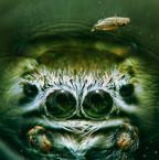 """BigBadWolf """"nautilus"""" (2010-01-20 13:13:40) komentarzy: 10, ostatni: Niezłe."""
