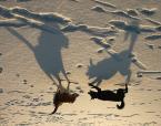 """myszok """"zmrożone cienie..."""" (2010-01-25 07:26:54) komentarzy: 26, ostatni: super!"""