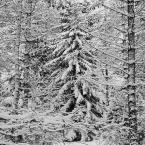 """KarmazyNowy """"zima"""" (2010-01-26 23:15:59) komentarzy: 5, ostatni: Cool!"""