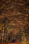 """myszok """"wspomnienie jesieni..."""" (2010-01-27 09:24:12) komentarzy: 2, ostatni: taką jesień uwielbiam:) ale teraz oby do wiosny;)"""