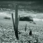 """Paddinka """""""" (2010-01-27 15:26:11) komentarzy: 4, ostatni: bdb"""
