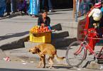 """Trollek """";)"""" (2010-01-29 15:07:44) komentarzy: 12, ostatni: ponoć pies w zachowaniu podobny do człowieka ;)"""