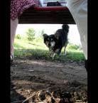 """detective """"Czajówa."""" (2010-02-12 22:49:12) komentarzy: 6, ostatni: ciekawe na co poluje tak miedzy nogami ;))))"""