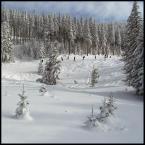 """Foto Fanka """"rodzime VANCOUVER"""" (2010-02-18 17:44:20) komentarzy: 11, ostatni: ładna zima, za oknem wróciła"""