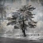 """Żaba-Ewa """"Moja zimowa planeta"""" (2010-02-24 15:44:17) komentarzy: 54, ostatni: brawo, brawo !"""