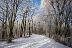 """darek893 """""""" (2010-02-26 21:31:47) komentarzy: 3, ostatni: Balagan w kadrze. Nie mozna bylo znalezc ladniejszego miejsca do tego rodzaju fotki? Niechby chociaz snieg byl nie podeptany albo bez jakis belek zalegajacych w polowie kadru."""