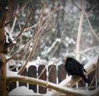 """aiks """"zimno..."""" (2010-02-27 07:01:09) komentarzy: 6, ostatni: Fajna obróbka"""