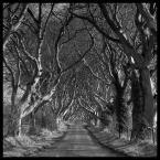 """Mnieteq """"Dark Hedges"""" (2010-02-28 12:53:19) komentarzy: 65, ostatni: Nie ma to jak fajne drzewa bardzo dobre zjecie"""