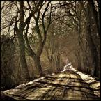 """matiosa """"."""" (2010-02-28 21:26:50) komentarzy: 8, ostatni: fajnie z tymi cieniami na drodze :)"""