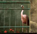 """marcinmgp """"zoodomowe"""" (2010-03-01 19:50:49) komentarzy: 8, ostatni: myślałam , że prawdziwy ... xDD"""