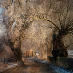"Żaba-Ewa ""Moja zimowa planeta"" (2010-03-03 16:27:57) komentarzy: 41, ostatni: cool"