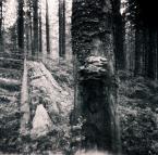 """neczek """""""" (2010-03-03 23:29:55) komentarzy: 21, ostatni: to drzewo ma twarz.. taka zasmucona troche.. z pomarszczonym czołem :)"""