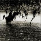 """BALTORO """"***"""" (2010-03-05 17:22:14) komentarzy: 1, ostatni: woda pięknie skrzy... no i poza tym, ogólnie ciekawie. Budzi refleksje i ...spokój, wbrew........."""