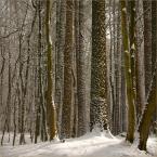 """koszmar69 """"Ostatnie podrygi Złej Pani Zimy :)"""" (2010-03-13 17:41:07) komentarzy: 5, ostatni: Pięknie fotografujesz las."""