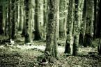"""Maskotka """"Drzewa umierają stojąc..."""" (2010-03-24 18:53:34) komentarzy: 4, ostatni: a mówią że leśnicy to zuo """":D"""