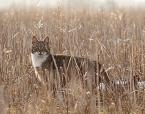 """da_tomala """"..."""" (2010-04-02 21:20:25) komentarzy: 2, ostatni: śliczny kotek :)"""