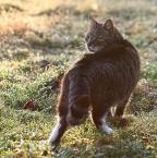 """da_tomala """"..."""" (2010-04-02 23:10:40) komentarzy: 5, ostatni: śliczny kotek :)"""