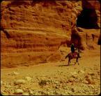 """f a b r o o """"człowiek i osioł"""" (2010-04-03 09:40:01) komentarzy: 27, ostatni: zawsze ten osiół"""
